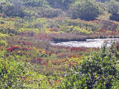 Pond In Aquinnah